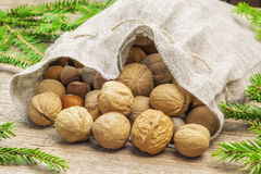 Walnuts with hazelnuts in linen bag with fir branches around Royalty Free Stock Images