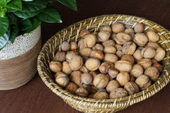 Walnuts and hazelnuts Stock Photos