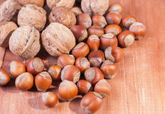 Walnuts and hazelnuts on wooden background Stock Image