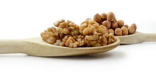 Walnuts & Hazelnuts on Wooden Spoons. Studio image of fresh walnuts and hazelnuts on wooden spoons with soft shadows against a white surface. Copy space stock photography