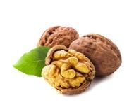 Walnuts isolated Royalty Free Stock Photo