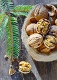 Walnuts isolated Stock Photography