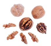 Walnuts Isolated on White Royalty Free Stock Images