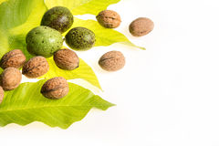 Walnuts isolated on white Stock Image