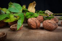 Walnuts Juglans regia. On a black background with leaves from the stoma Royalty Free Stock Images