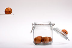 Walnuts jumping in a a jar. A happy walnut jumping in a jar Stock Photos