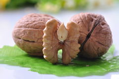 Walnuts--a kind of popular nuts in the world Royalty Free Stock Image