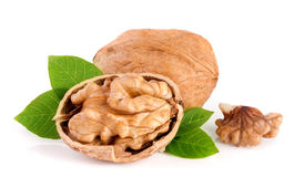 Walnuts with leaf  on white background.  Stock Photos