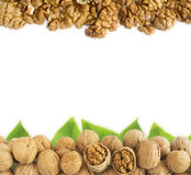Walnuts with leaves at border of image with copy space for text Stock Photos