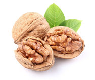 Walnuts with leaves. Dried walnuts with leaves on a white background Stock Photos