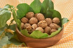 Walnuts and leaves royalty free stock image