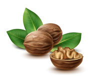 Walnuts with leaves Royalty Free Stock Images