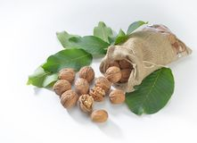 Walnuts and leaves on white background stock photography