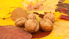 Walnuts lie on autumn leaves Royalty Free Stock Image