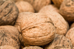 Walnuts. Lot of dirty walnuts in the pile Stock Images