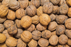 Walnuts. Lot of dirty walnuts in the pile Royalty Free Stock Photos