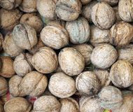 Walnuts Royalty Free Stock Image