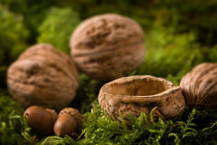 Walnuts on moss Royalty Free Stock Photography