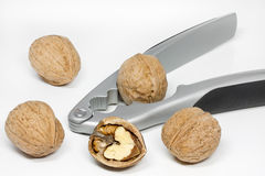 Walnuts with nut Royalty Free Stock Photo
