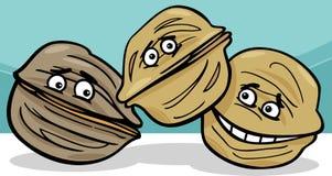 Walnuts nuts cartoon illustration Royalty Free Stock Image