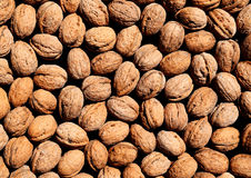Walnuts. Nuts have long been considered a symbol of life and fertility Royalty Free Stock Photos