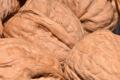 Walnuts. Nuts in their shell in macro photos Royalty Free Stock Photo