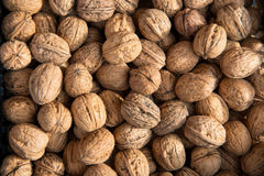 Walnuts in a nutshell. Royalty Free Stock Photography