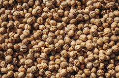 Walnuts with nutshell. Walnuts background and texture. Stock Image