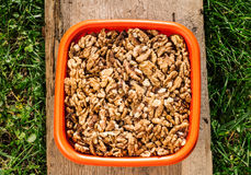 Walnuts in orange bowl Royalty Free Stock Photo