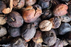 Walnuts picked up in the wood Stock Images