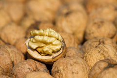 Walnuts pile. On  background texture Stock Images