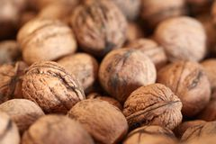 Walnuts in a pile royalty free stock photo