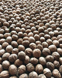 Walnuts pile. A pile of walnuts in shells Royalty Free Stock Photography