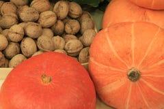 Walnuts pumpkin Stock Photos