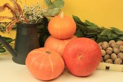 Walnuts pumpkin Stock Images