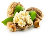 Walnuts qand hazelnuts isolated on the white background Royalty Free Stock Image