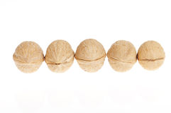 Walnuts in a row Stock Photography