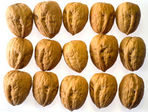 Walnuts in rows. Rows of closed walnuts Royalty Free Stock Photos