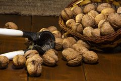 Walnuts on a rustic old wooden table. walnuts on a wooden table. Side view. Walnuts on a rustic old wooden table. Three walnuts on a wooden table Royalty Free Stock Images