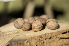 Walnuts on a rustic wood Stock Images