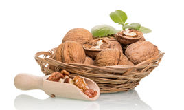 Walnuts in scoop and basket Stock Image