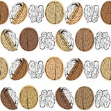Walnuts. Seamless  pattern on a white background. Stylish Royalty Free Stock Images