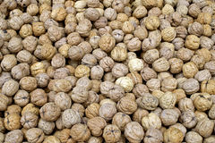 Walnuts in shell. Vegetable eating food Stock Photo