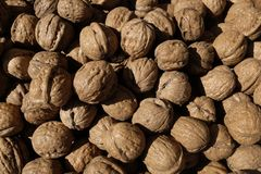 Walnuts with shell Royalty Free Stock Photography
