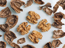 Walnuts Stock Photography