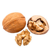 Walnuts in shells isolated on white background. Isolated walnut on white background royalty free stock photography