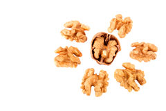 Walnuts without shells isolated on white background. Walnut isolated on white background as package design element royalty free stock photography