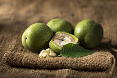Walnuts in a skin Royalty Free Stock Image