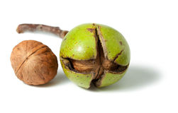 Walnuts in a skin and peeled away Royalty Free Stock Photography