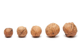 Walnuts from small to big isolated Royalty Free Stock Photos